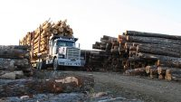 Meeting the workforce needs of American loggers