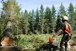 Falling log prices impact on woodlot harvesting