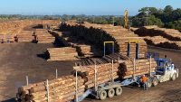 Concerns raised on softwood log exports