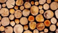 Russia plans to ban log exports