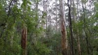 Tasmania launches updated Forest Practices Code