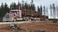 Two million tonnes of fire salvaged timber sold