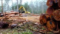Native forest logging in WA banned from 2024